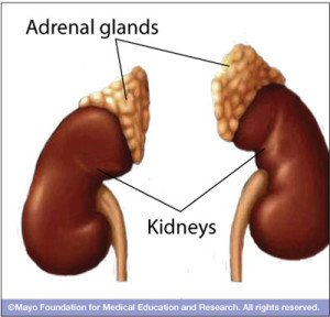 healthy adrenal glands prevent chronic inflammation